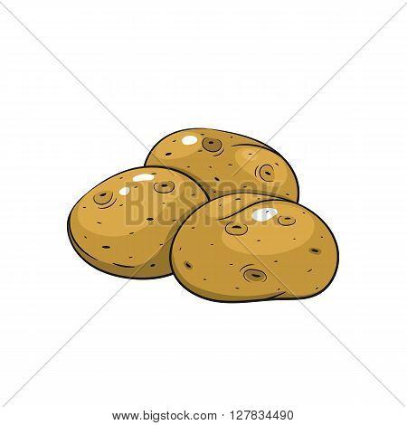 Vector potato illustration. Potato isolated on white background. Vector sketch hand drawn - stock vector