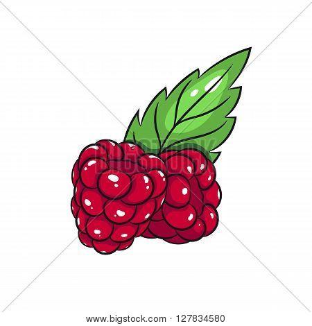 Vector raspberries illustration. Raspberries isolated on white background. Vector sketch hand drawn fruit - stock vector