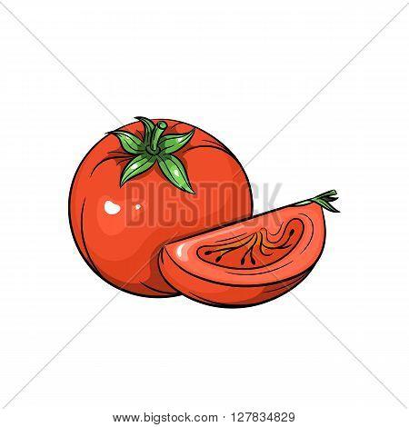 Vector tomato illustration. Slice of tomato, tomato isolated on white background. Vector sketch hand drawn - stock vector