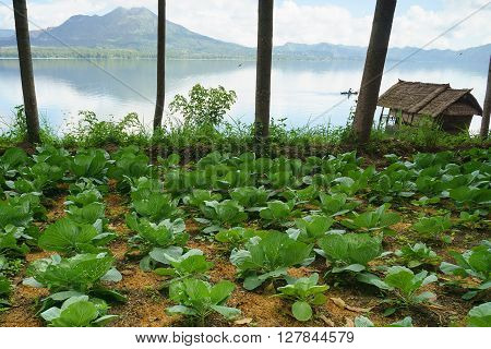 Small organic vagetable farm by the lake.