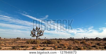 Joshua Tree cloudscape in Southern California high desert between Lancaster, Littlerock, and Palmdale California