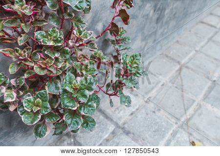 The Selective Focus Of Green Plant With Cement Background