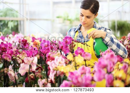 florist Woman hands with sprayer spraying on flowers take care of the garden