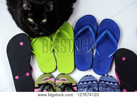 assorted colored flip flops on white background guarded by black cat with green eyes