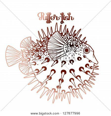 Graphic puffer fish isolated on white background. Sea hedgehog. Sea and ocean creature in brawn colors. Vector element for seafood menu. Coloring book page design