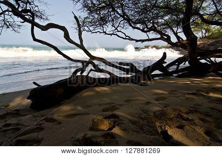 In Wet Woods Of Puako Beach -2