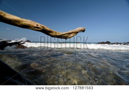 Giant Dry Trunk At Puako Beach - 2