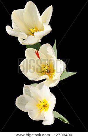 Three Tulip Centers