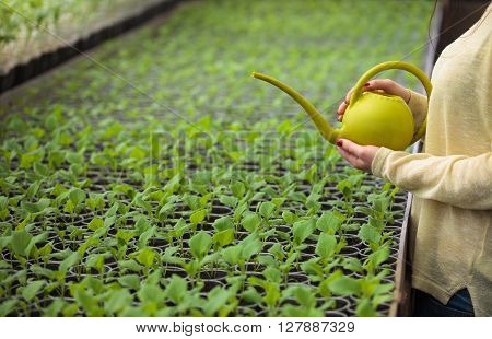 Hands Of Farmer Woman Watering Green Seedlings In Greenhouse