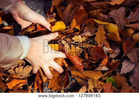 Woman Grabbing Golden Leaves From The Ground