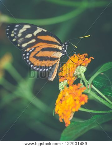 Vintage style image of an orange butterfly