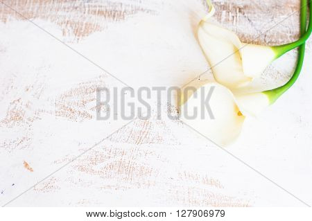 Calla Flowers On Rustic Table