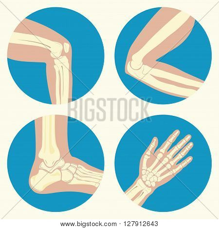Set of human joints, knee joint, elbow joint, ankle joint, wrist, emblem or sign of medical diagnostic center or clinic, flat design, vector