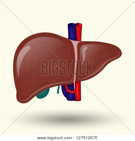 Human liver sign, human liver isolated on white background, human liver cartoon design icon, vector
