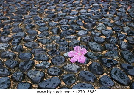 A piece of pink poui flower lying on ground made of pebbles and concrete in rain.