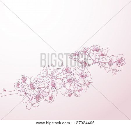 blossoming tree line art hand drawn illustration. spring stylish horizontal background with pink plum flowers vector
