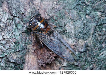 Cicada close up photo - Cicada taken macro photo over the shell tree