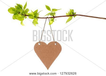 Tree branch with heart shaped tag isolated on white background