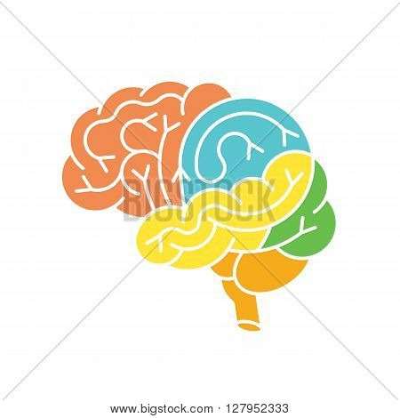 Human brain anatomy structure. Human brain anatomy illustration. Vector human brain anatomy in flat style easy recolor. Structure of human brain section.