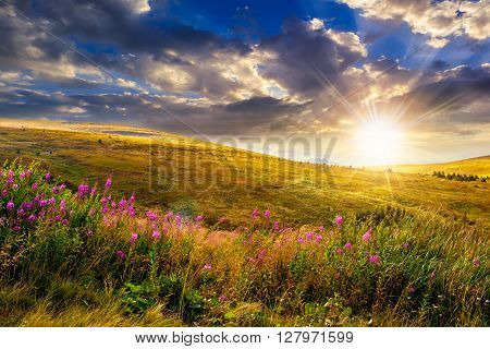 landscape with high wild grass and purple flowers on the top of high mountain in evening light
