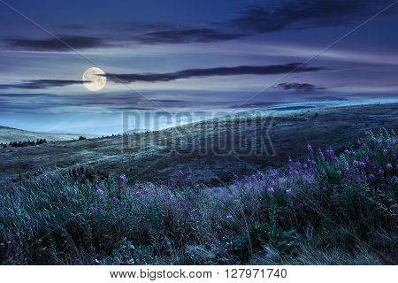 landscape with high wild grass and purple flowers on the top of high mountain at night in full moon light