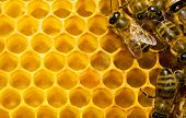 Macro of working bee on honeycells. poster