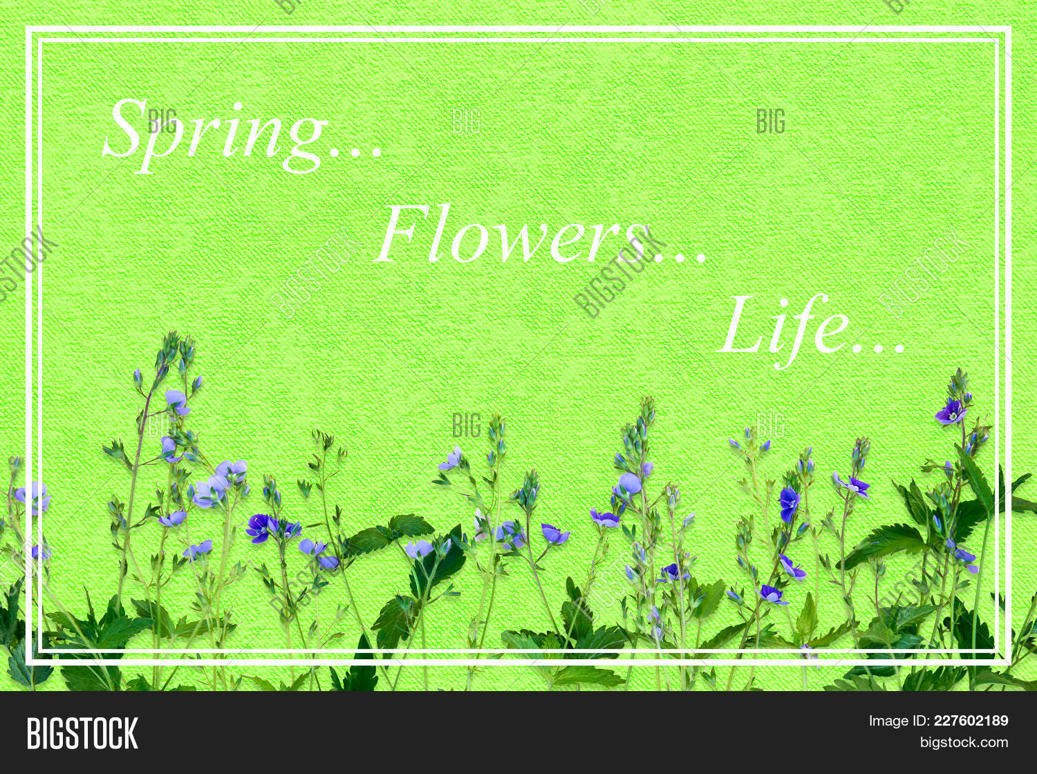 Spring background image photo free trial bigstock spring background with small purple flowers the name of the flower veronica chamaedrys rectangular izmirmasajfo