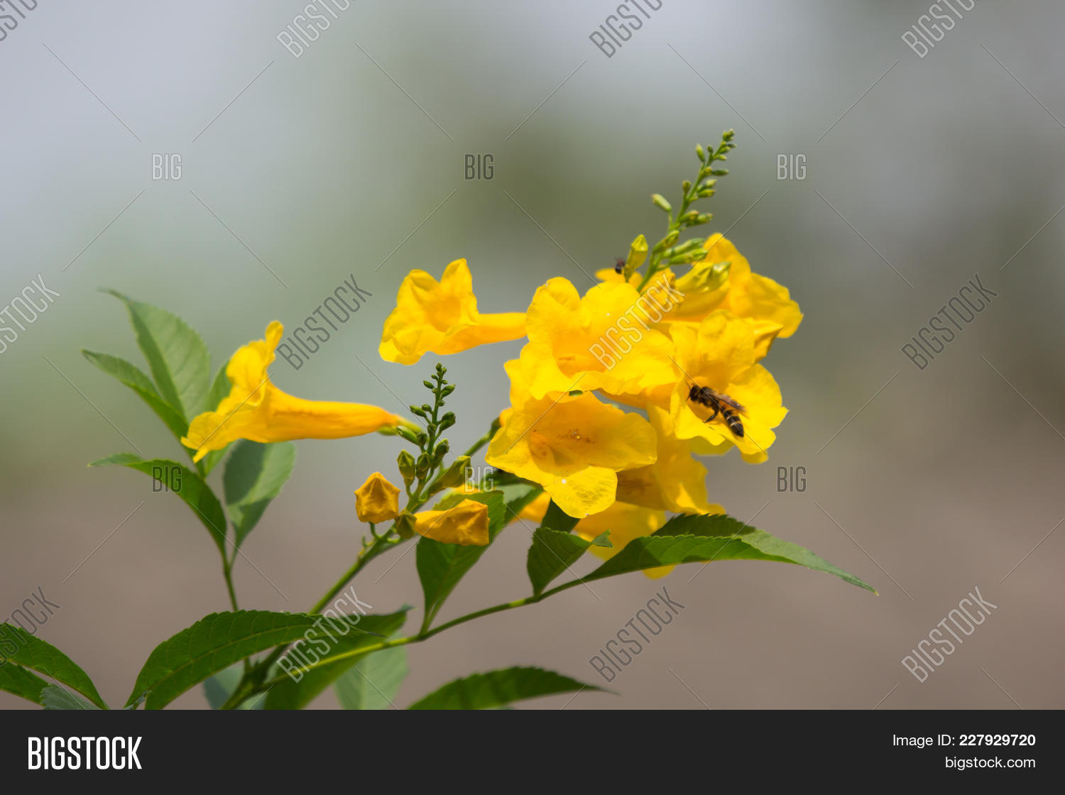 Bee Yellow Flower Image Photo Free Trial Bigstock