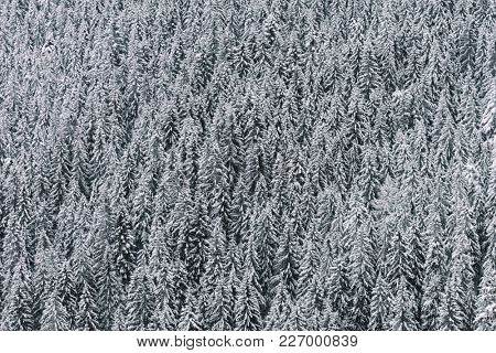 Aerial view of winter landscape.