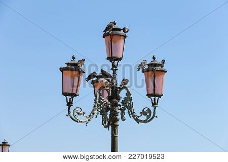 Old Lantern With Pigeons On Famous St. Mark's Square In Venice, Italy