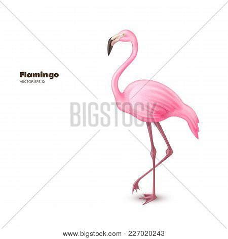 Realistic 3d Flamingo. Pink Vector Tropical Exotic Bird Standing. Holiday Travel Vacation Beach Pool