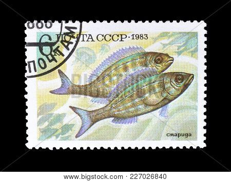 Soviet Union - Circa 1983 : Cancelled Postage Stamp Printed By Soviet Union, That Shows Pickerel Fis