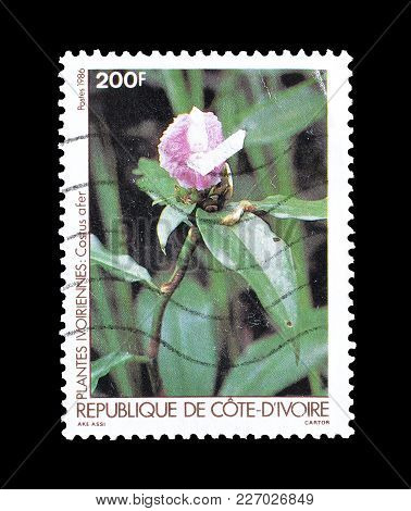 Ivory Coast - Circa 1986 : Cancelled Postage Stamp Printed By Ivory Coast, That Shows Costus Afer Fl