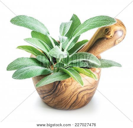 Fresh leaves of garden sage in the wooden mortar on the white background.