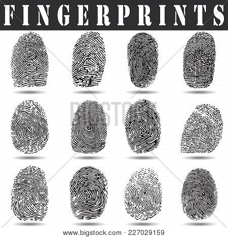 Fingerprint Vector Illustration.fingerprint Scan On A White Background With A Shadow