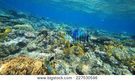 Big Barrier Reef Corals The Ocean Is Beautiful, Under Water Diving Pacific Ocean
