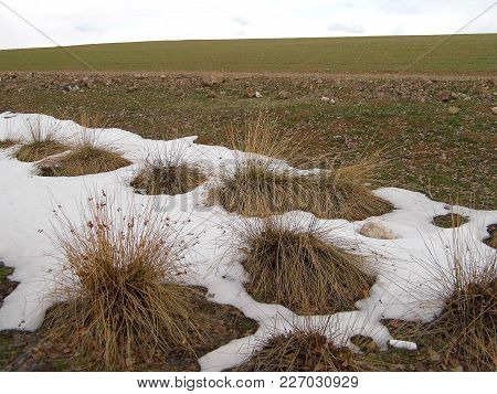 In Winter The Snow Began To Melt Between The Reeds, The Spring Comes Slowly, The Nature Revives,