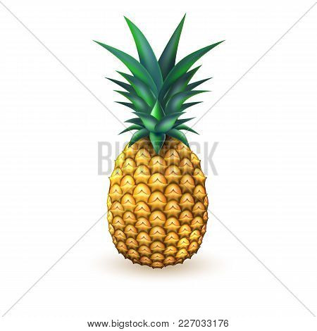 Pineapple Realistic Fruit. Vector Illustration. 3d Ripe Tropical Exotic Juicy Fresh Food, Vitamin He