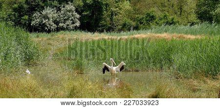 Cigogne Blanche Ciconia Ciconia Sitting In Swamp