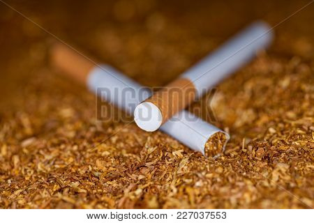 Two Cigarettes Lies On Brown Tubing Tobacco