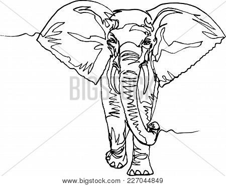 Elephant Walking, Front View. Africa, Black Liner Continuous Line Drawing. Wildlife, Animal