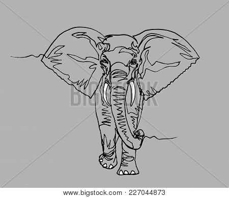 Elephant Walking, Front View. Africa, Black Liner Continuous Line Drawing On Gray Paper. Wildlife, A