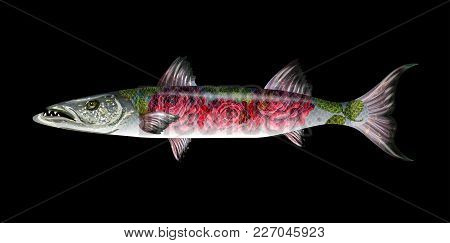 Fish Barracuda With Roses . Vector Realistic Illustration