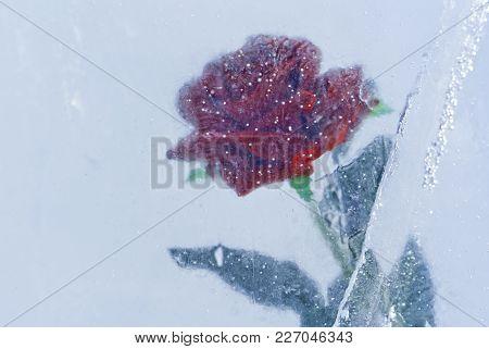 Scarlet Rose, Frozen In Blue Translucent  Ice