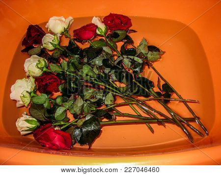 White And Red Roses In An Orange Basin. Aromatic Bath