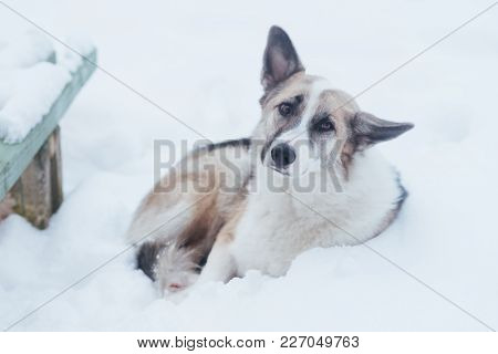Homeless Sad Lonely Dog Lying Near The Bench In The Snow, For Any Purpose