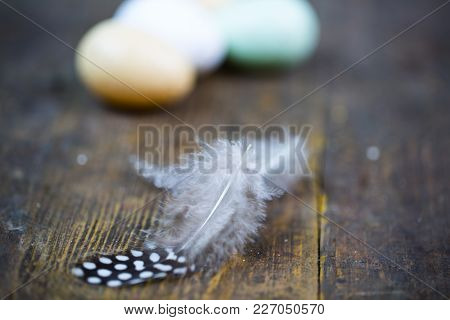 Feather From A Quail, Wood Background, Wicker