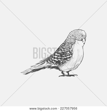 Illustration drawing style of parrot