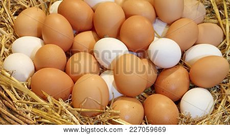 Basket With Lots Of Hen Eggs In The Farm