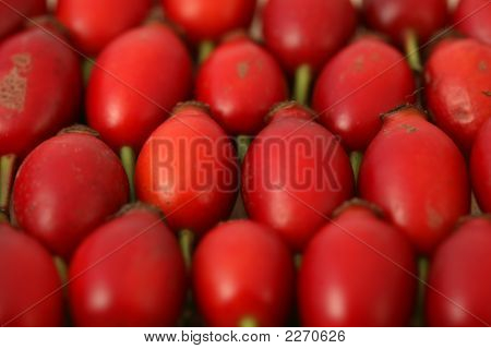 Rose Hip Berries Autumn Colour